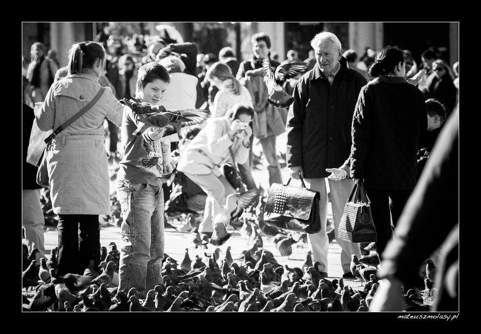 Gołębie, Wenecja, Włochy | Pigeons, Venice, Italy