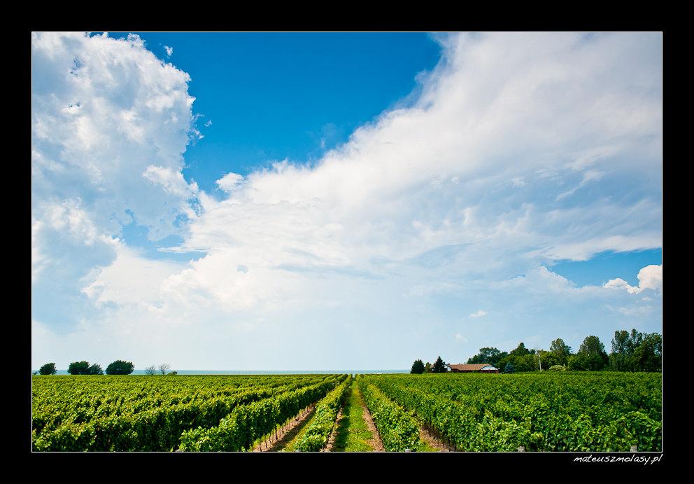 Konzelmann Estate Winery, Ontario, Canada